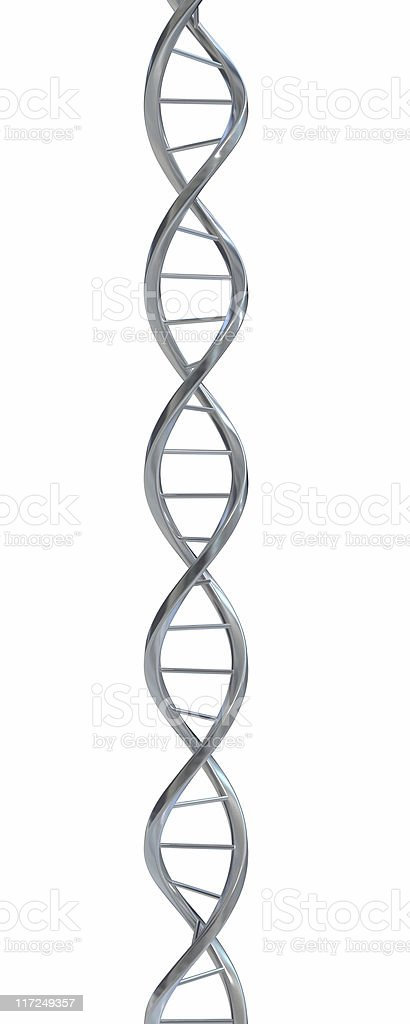 Model of DNA double helix in front of white background stock photo