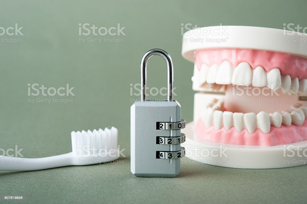 Model of teeth stock photo