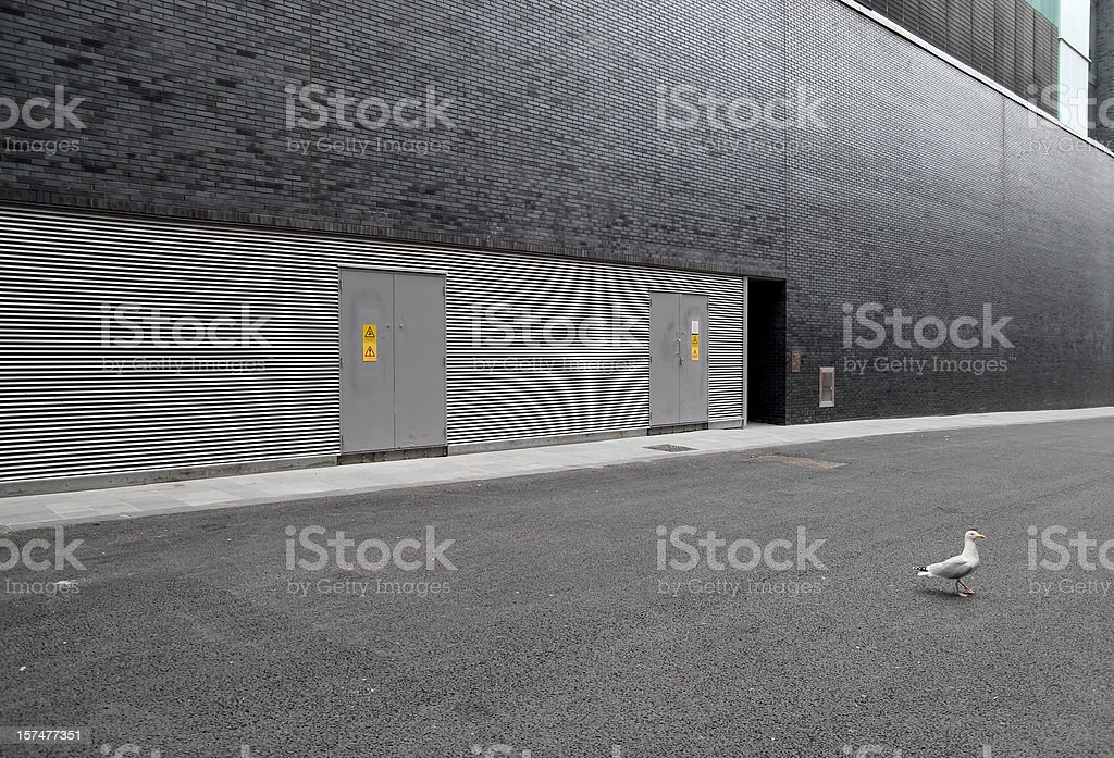 Modern architecture wall with seagull stock photo
