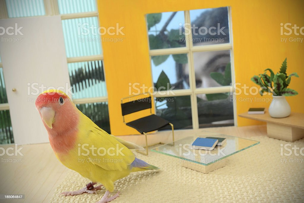 Modern Bird House royalty-free stock photo