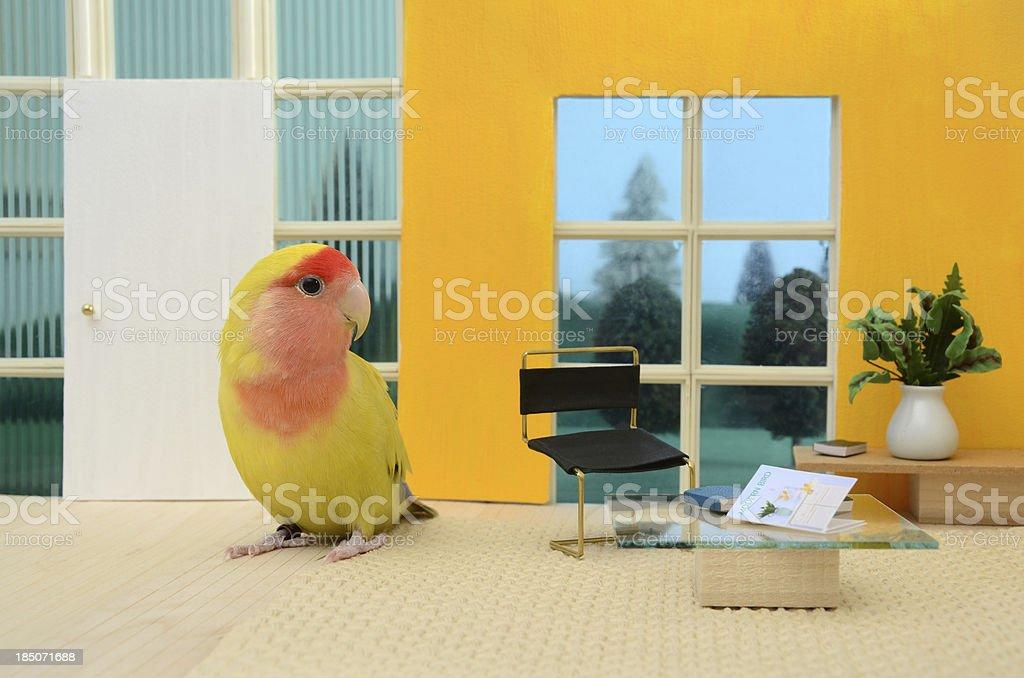 Modern Bird House stock photo