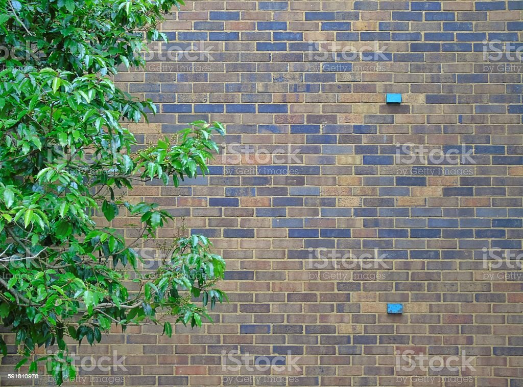 Modern Brick wall for background with tree stock photo
