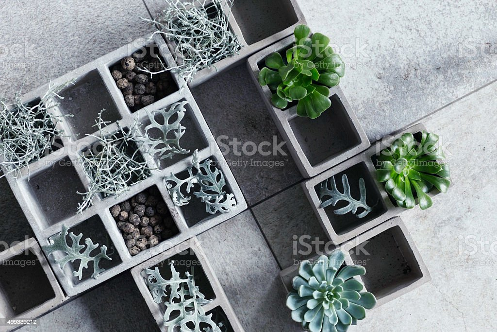 Modern composition with cubical concrete planters and succulents. stock photo