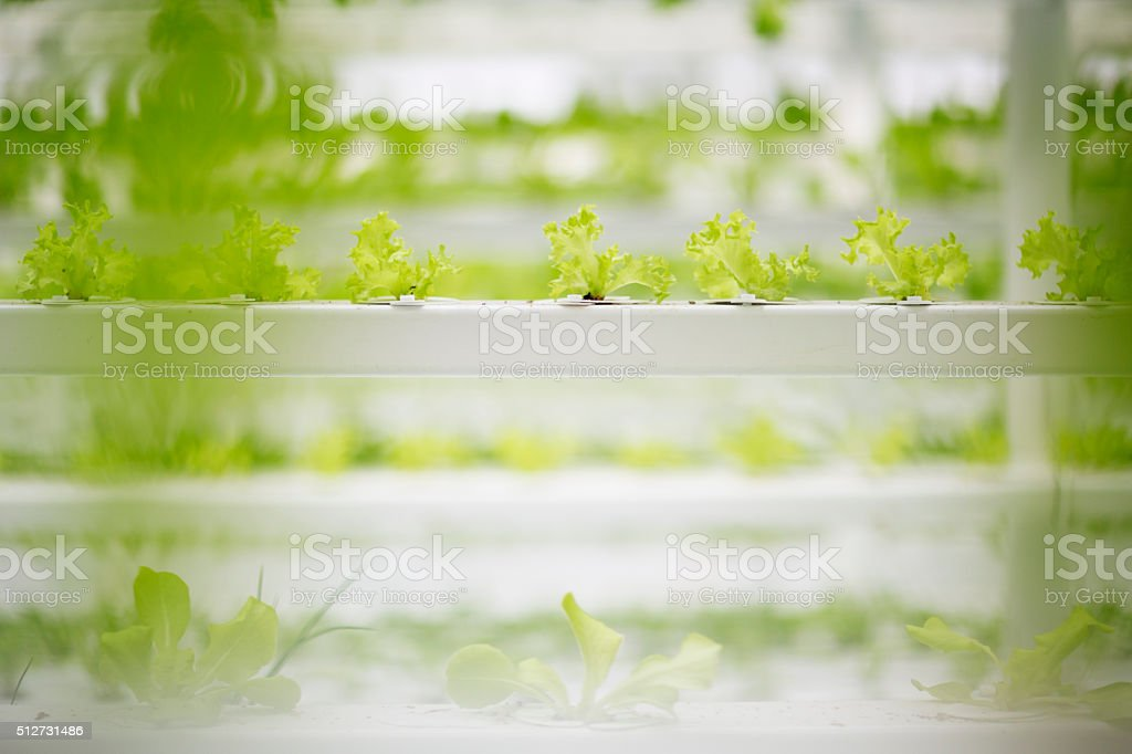 Modern Food Production stock photo