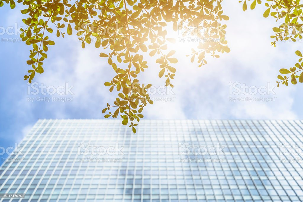 modern glass building and green leaves against sunbeam stock photo