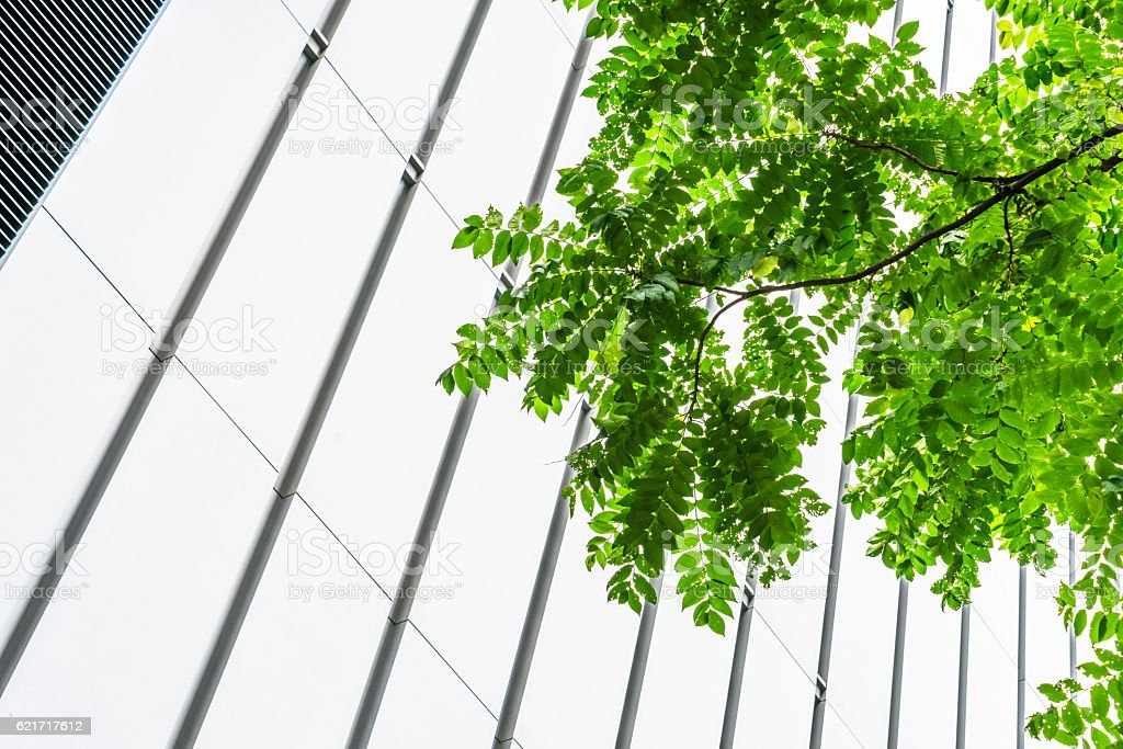 modern glass wall with green leaves stock photo