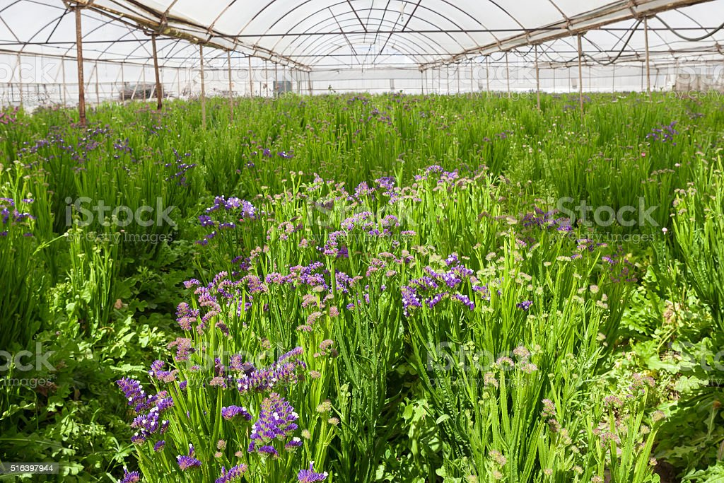 Modern Greenhouse stock photo