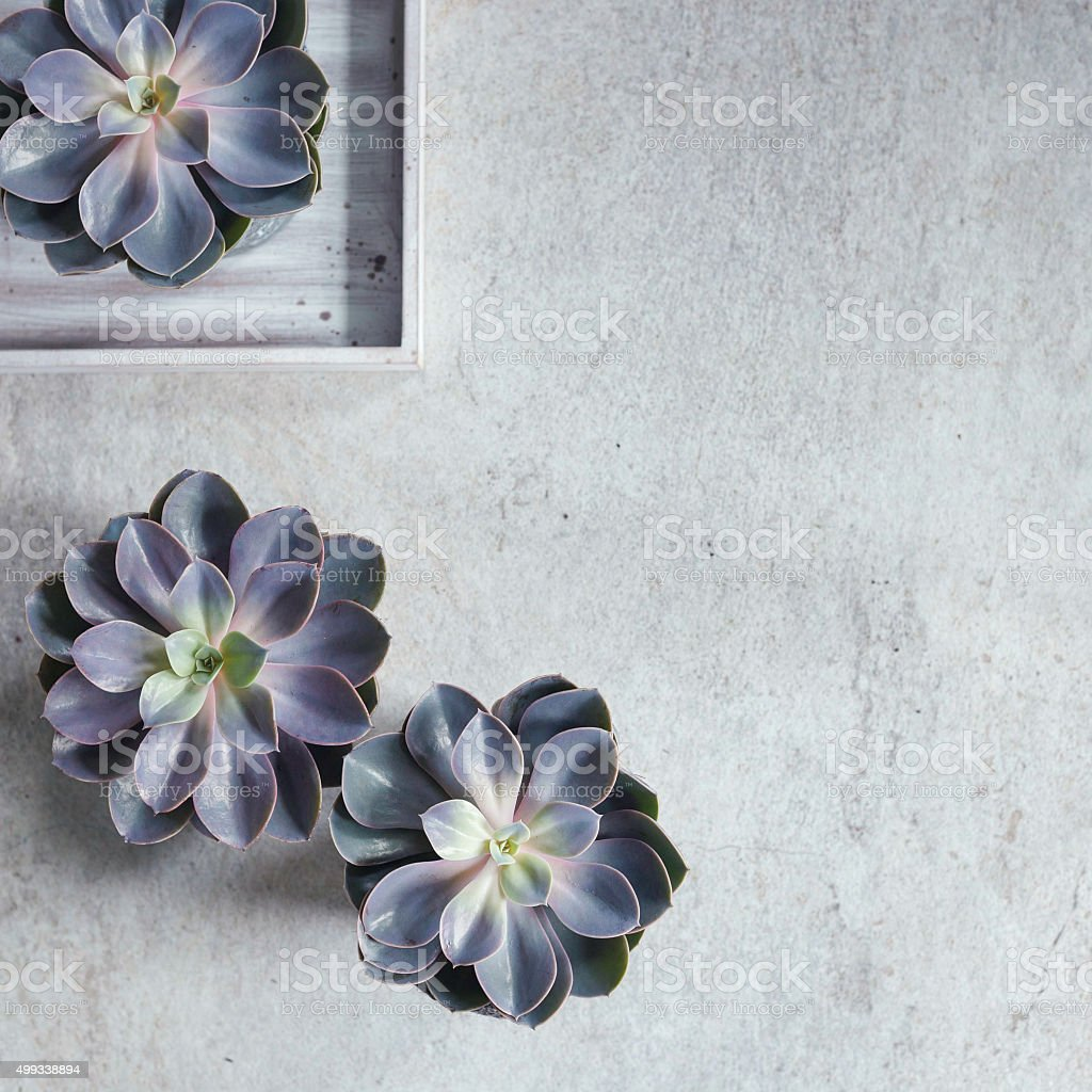 Modern, minimalist composition with succulent plants. stock photo