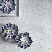 Modern, minimalist composition with succulent plants.