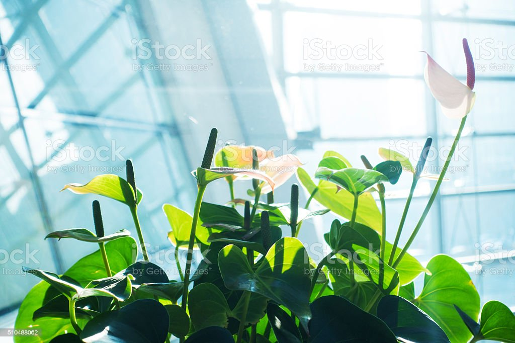 Modern office building with green plant stock photo