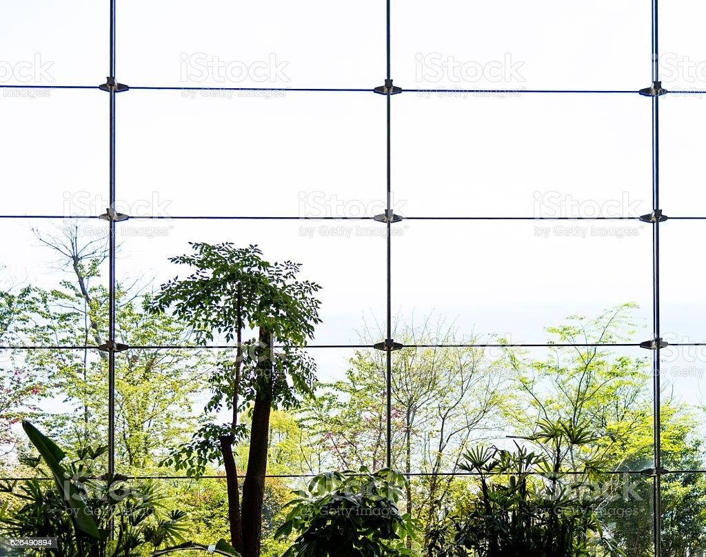 Modern office window with green tree stock photo