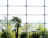 Modern office window with green tree