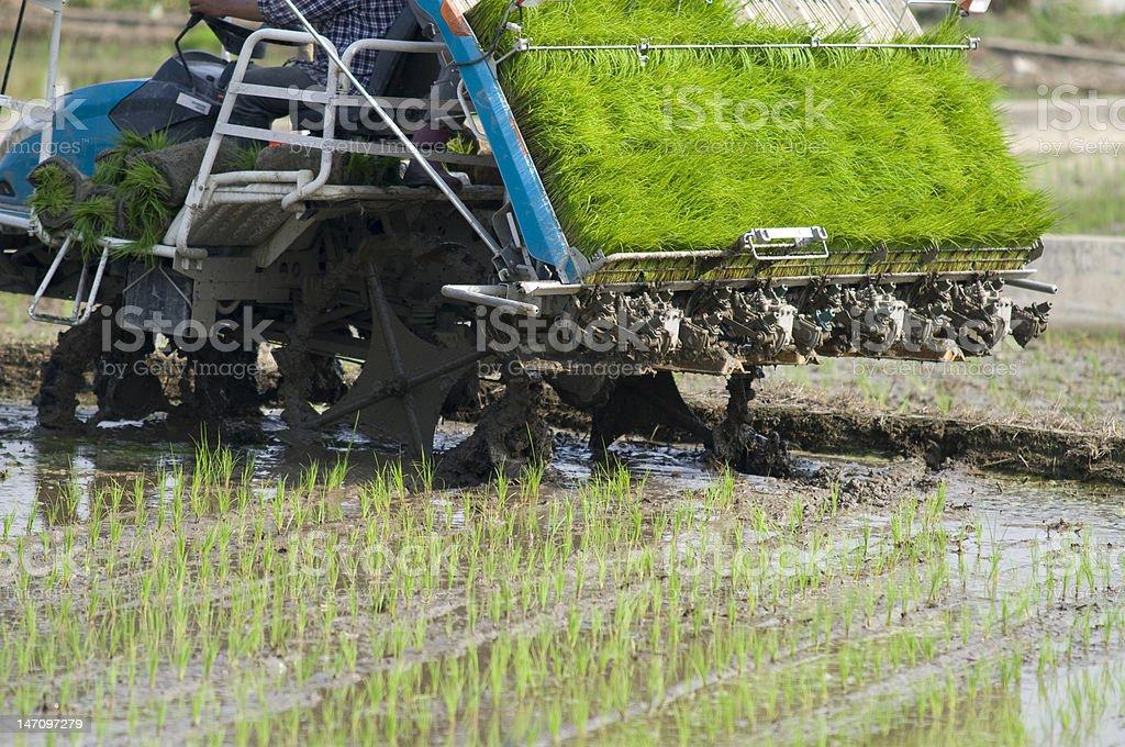 Modern Rice Planter in Taiwan royalty-free stock photo