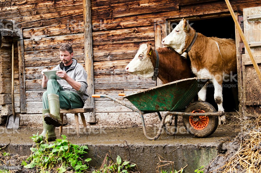 Modern Swiss farmer with digital tablet observed by his cattle stock photo