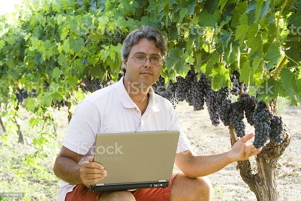 Modern Vintner Controlling The Harvest With Laptop royalty-free stock photo