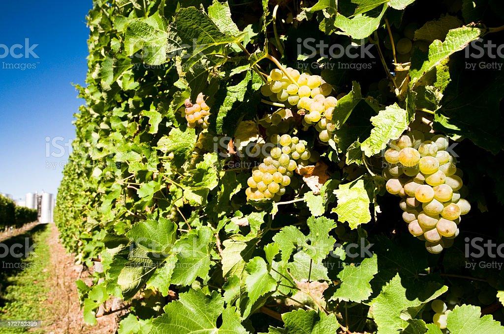 Modern Wine Industry stock photo