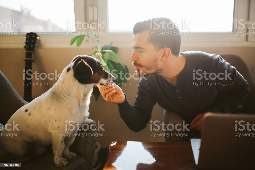 Modern young man at home playing with pet dog stock photo