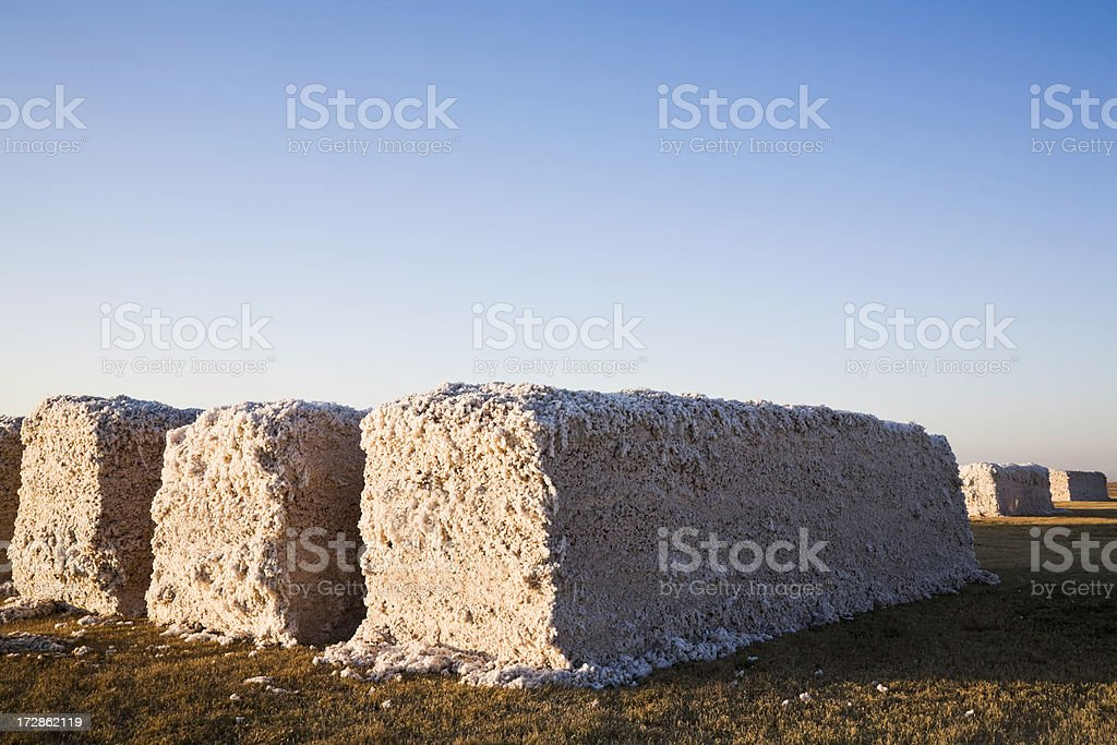 modules of harvested cotton stock photo