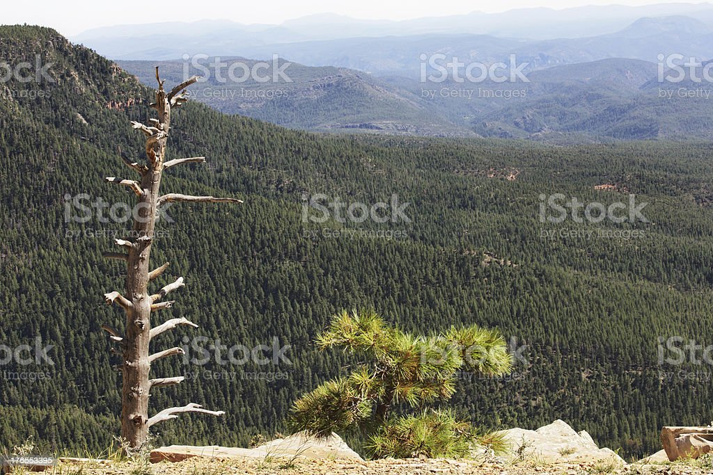 Mogollon Rim Coconino Forest Landscape royalty-free stock photo