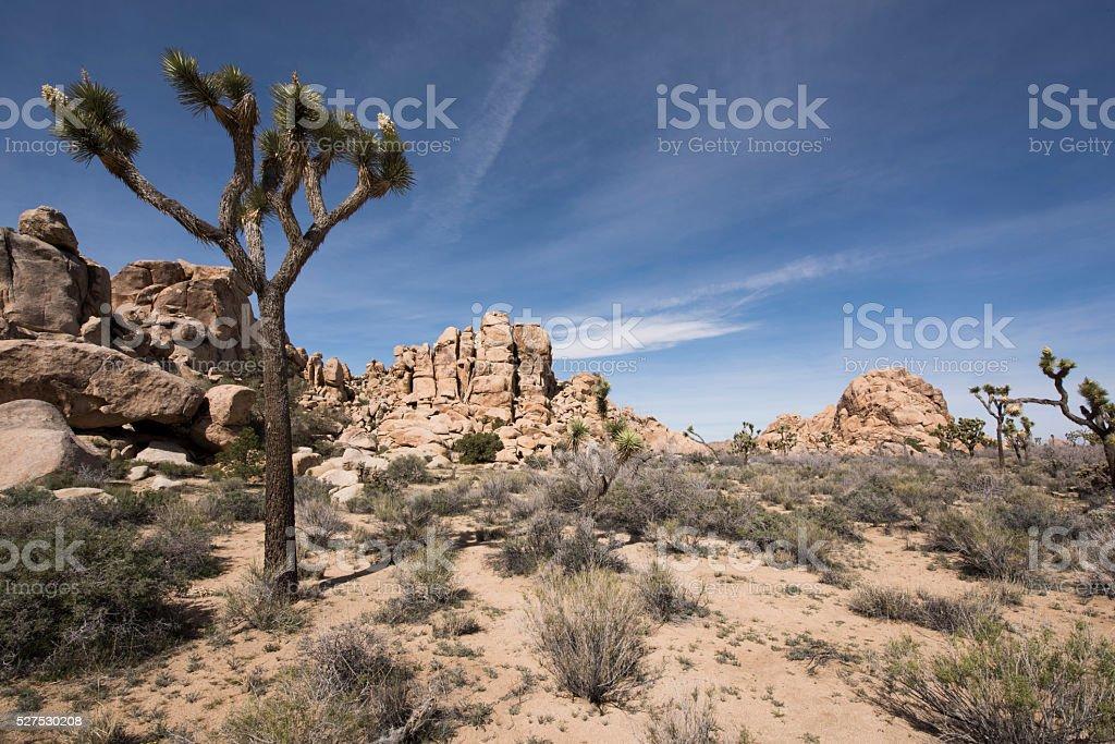 Mohave Desert stock photo