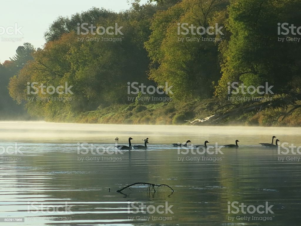 Mohawk River, Morning Steam, Canadian Geese Duck Swimming, Schenectady, NY stock photo