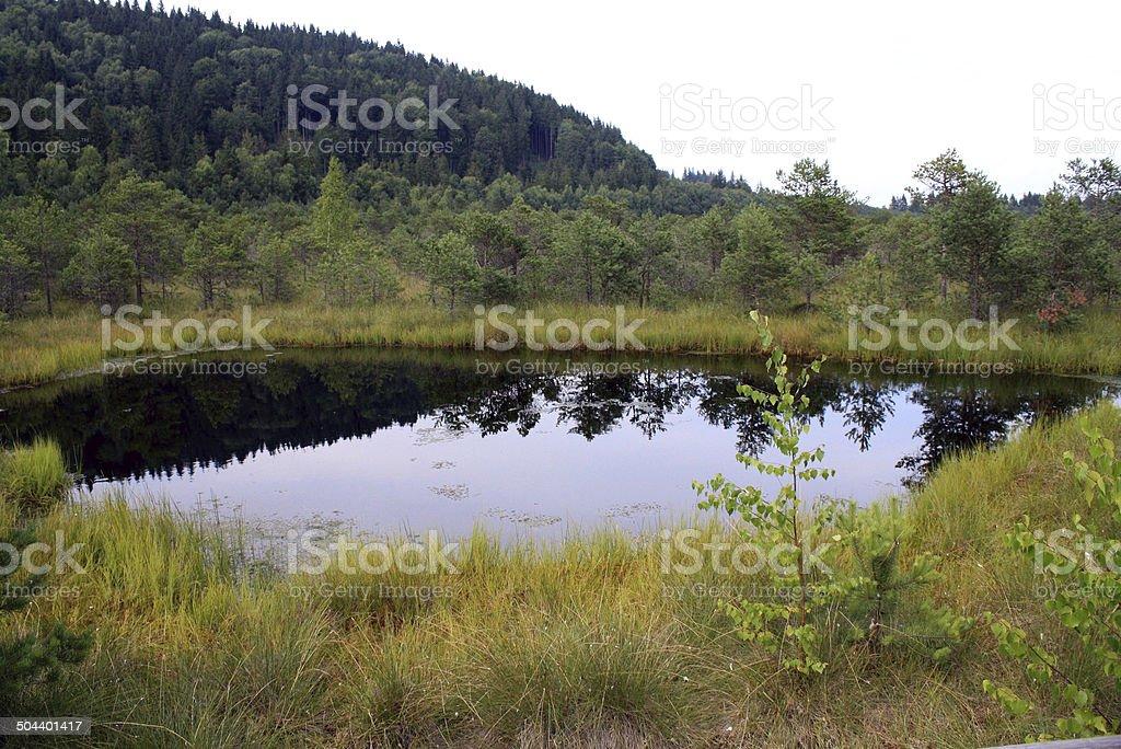 Mohos Peat-Bog - botanical reserve royalty-free stock photo
