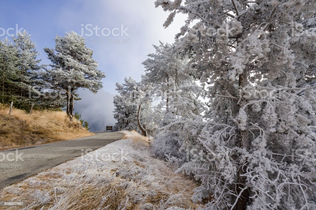 Moisiere Pass and Sapet forest covered in frost, Alps, France stock photo