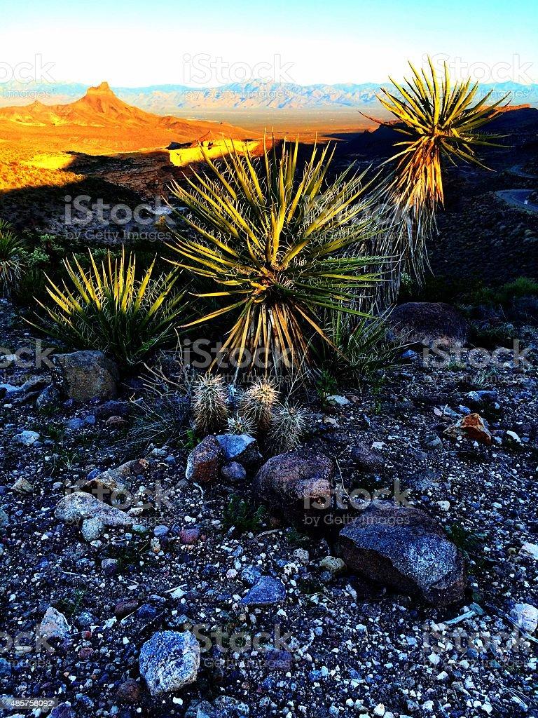 Mojave beauty stock photo