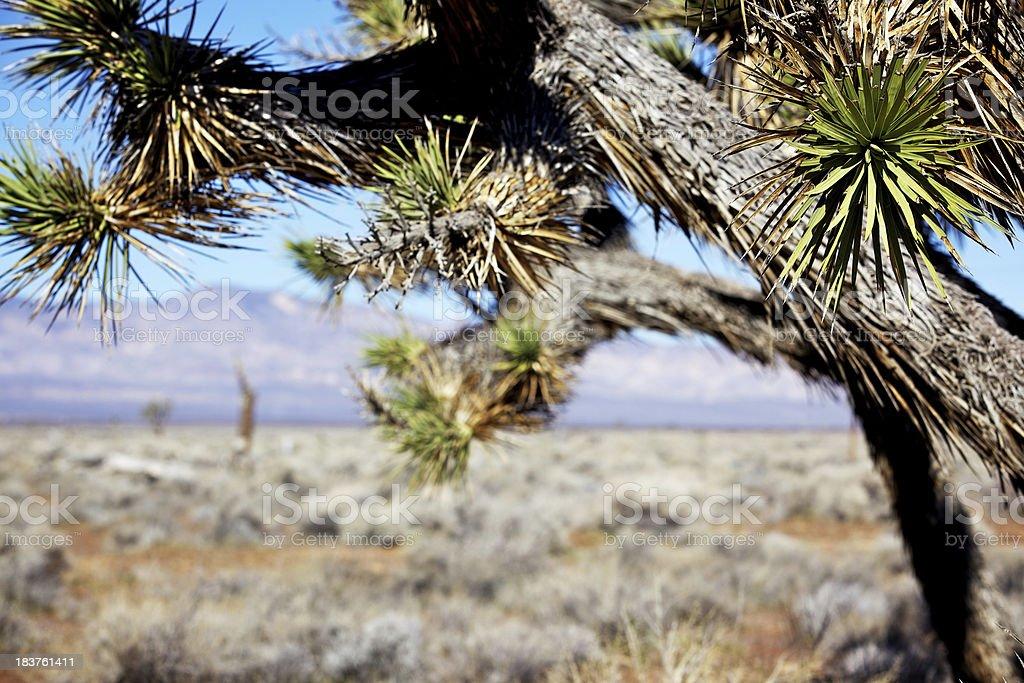 Mojave California desert scenery stock photo