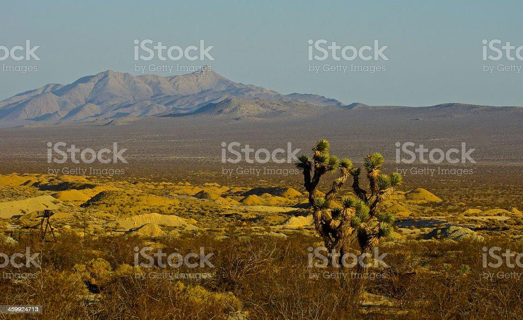 Mojave Desert Joshua Tree stock photo