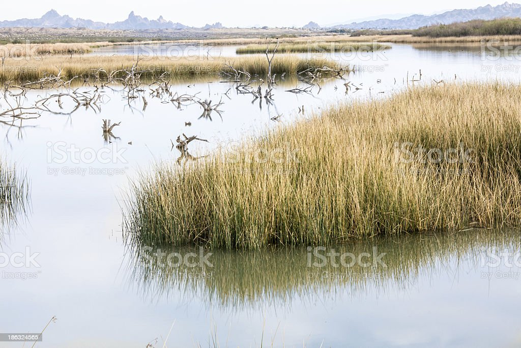 Mojave Desert Marshes royalty-free stock photo