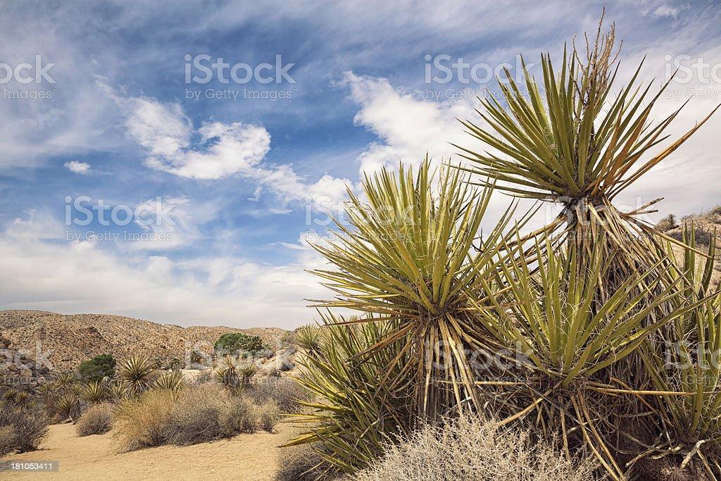 Mojave Desert royalty-free stock photo