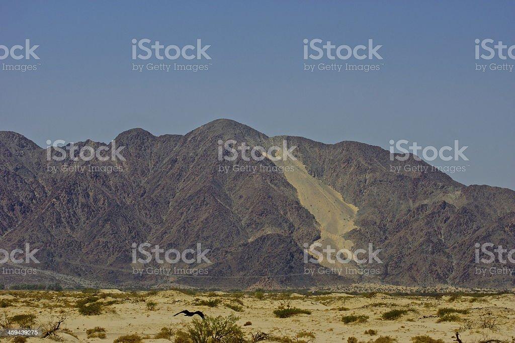Mojave Desert Raven Flight stock photo