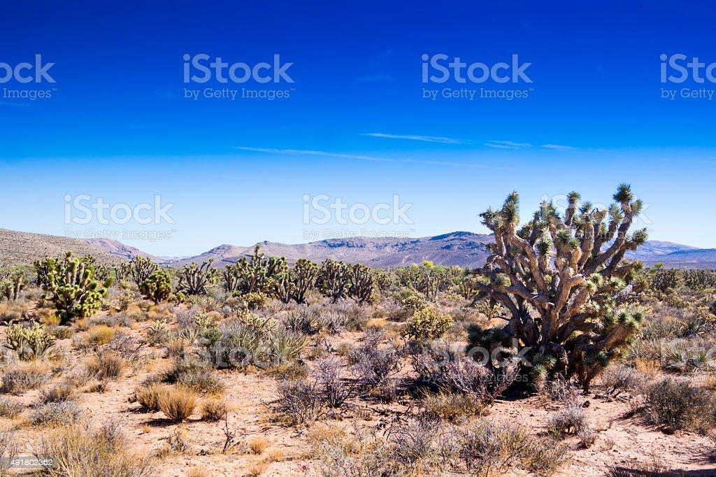 Mojave stock photo