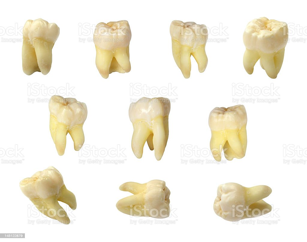 molar teeth stock photo