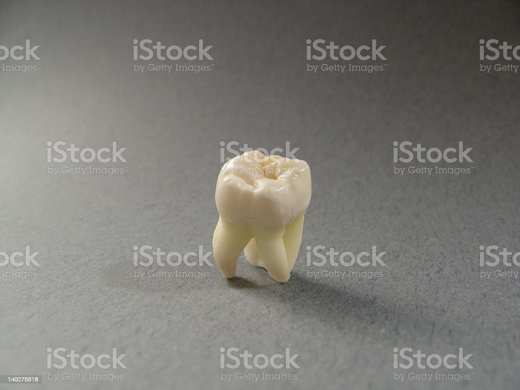 molar tooth stock photo