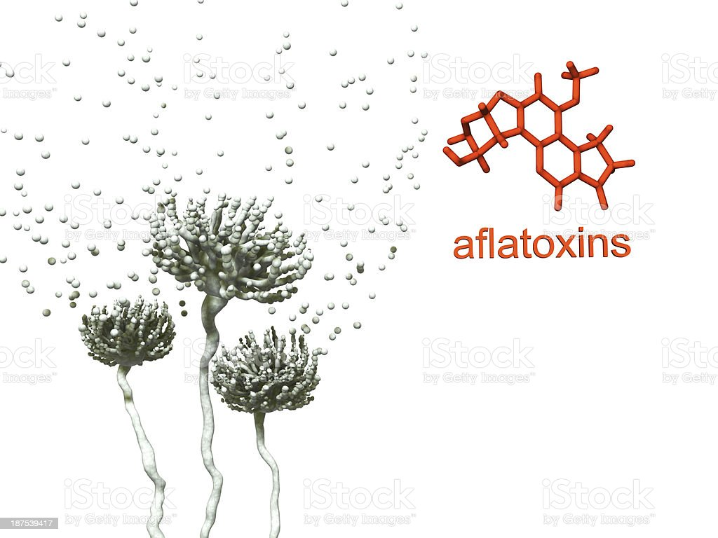 Mold and aflatoxin stock photo