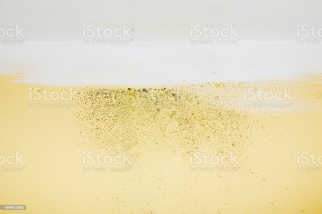 Mold and Dampness stock photo