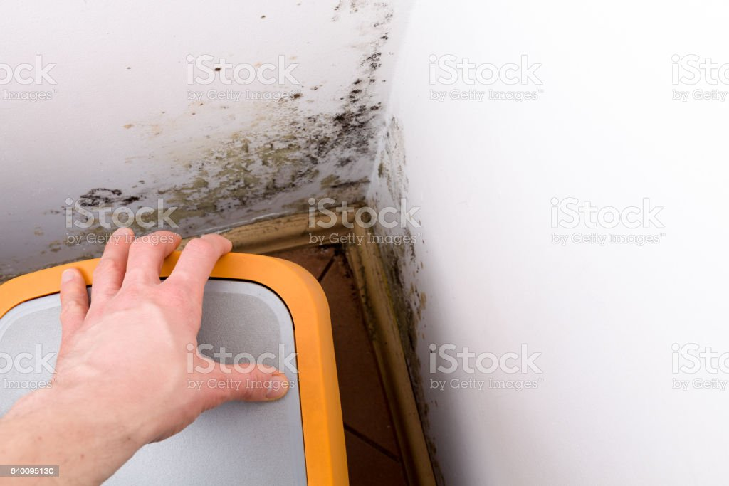 Mold and fungus behind rubbish bin on wall. stock photo
