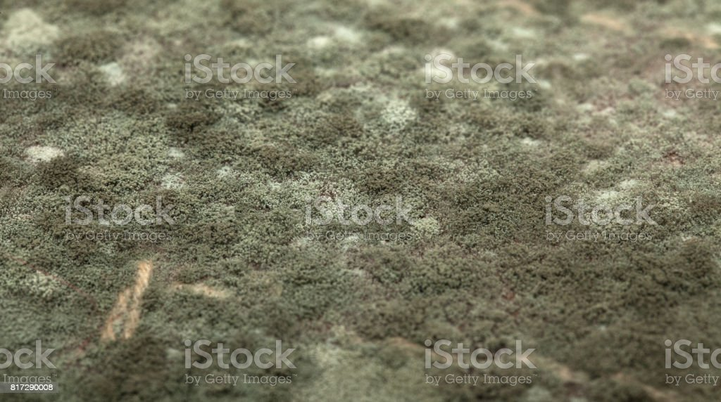 Mold at leather, close-up stock photo