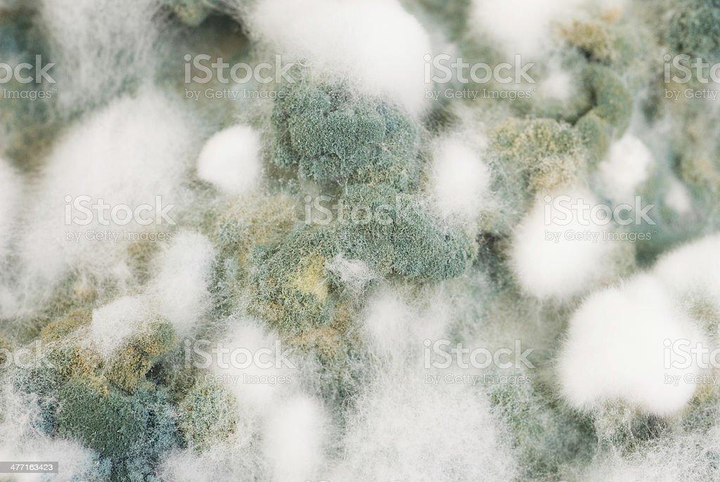 mold background macro shot royalty-free stock photo