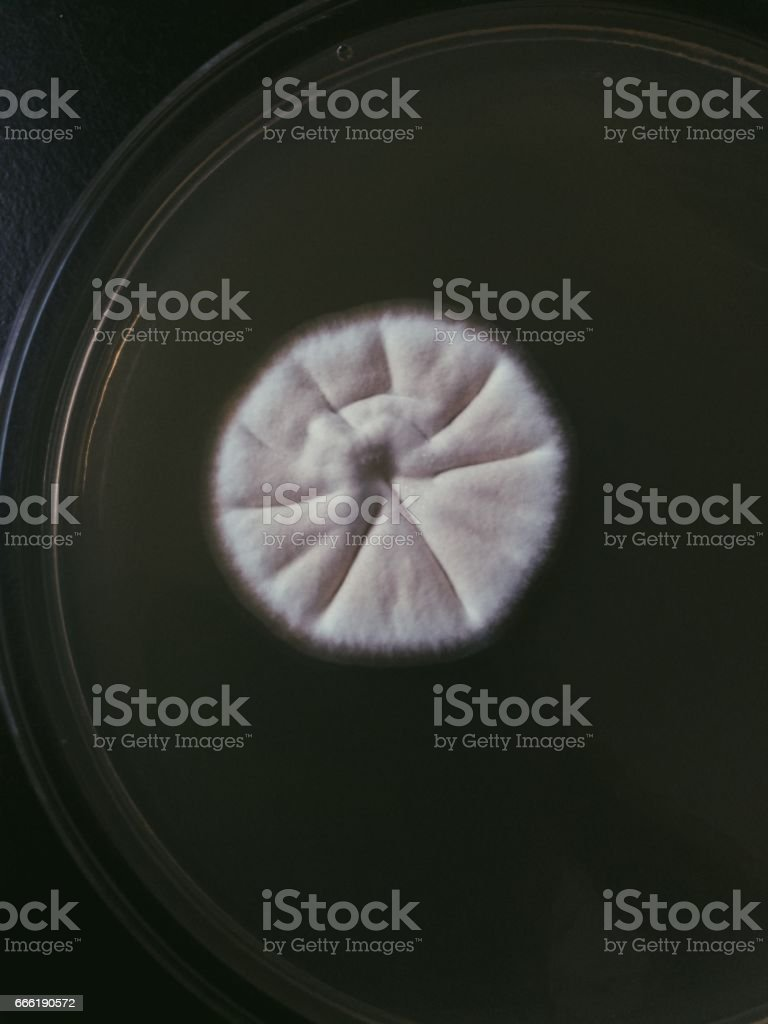 mold colony stock photo