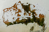 Mold Fungus Peeling Flaking Paint Due to Rising Damp