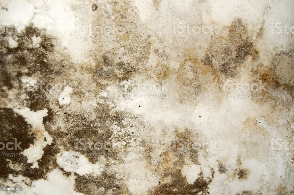mold fungus royalty-free stock photo