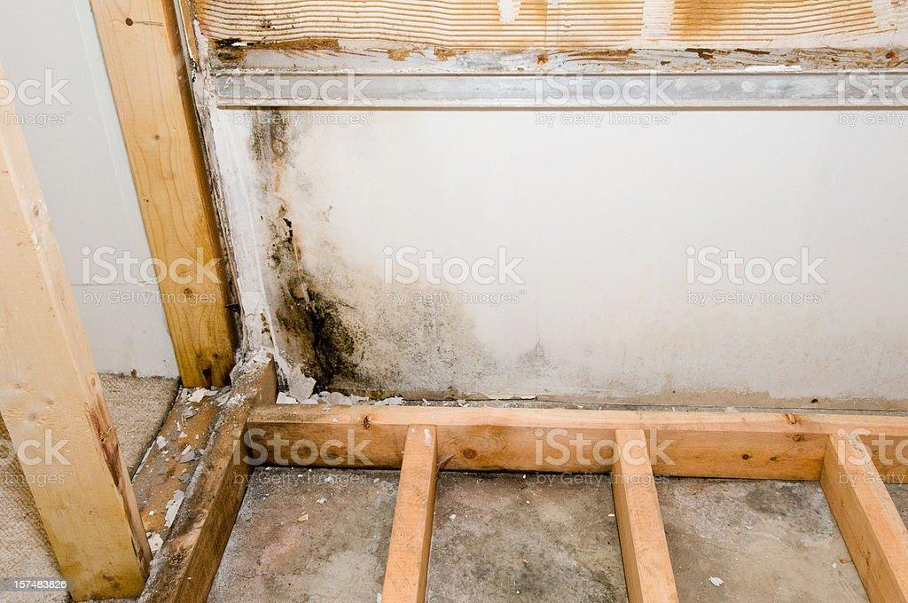 Mold growing in basement bathroom stock photo