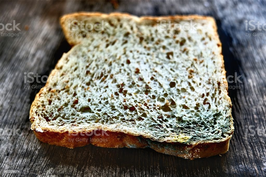 Mold growing on bread stock photo