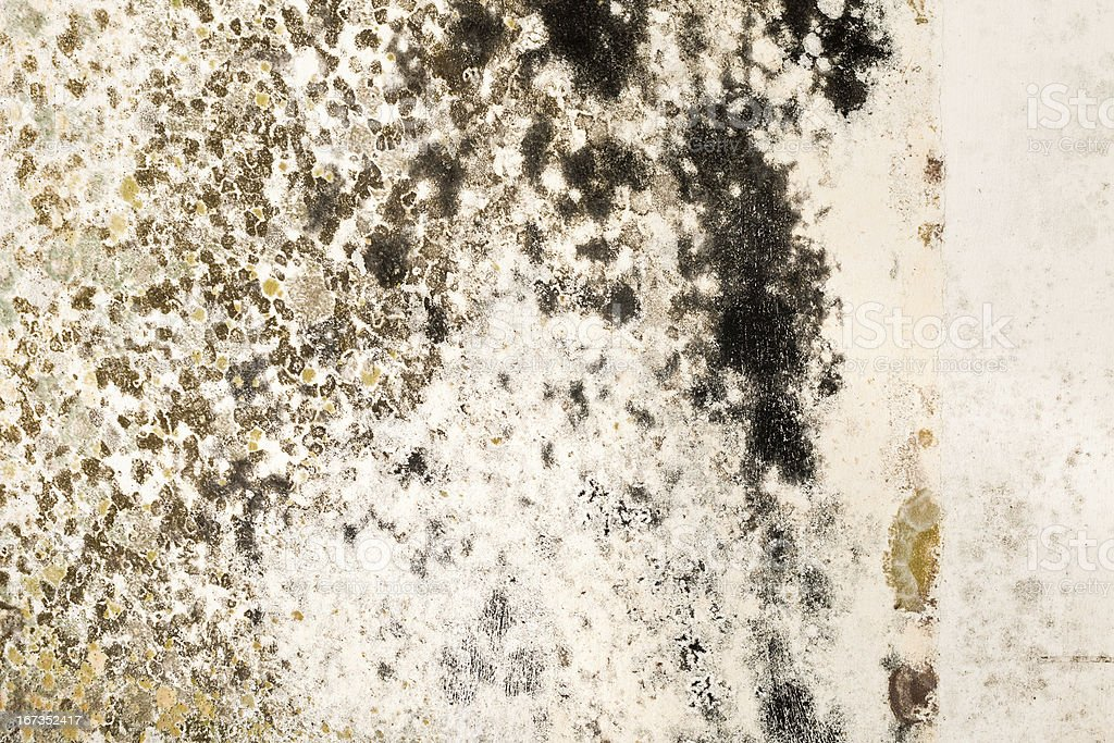 Mold Growth on Stained Plaster Wall Close-Up stock photo