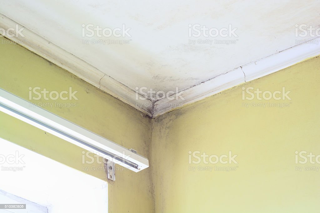 Mold in a edge stock photo