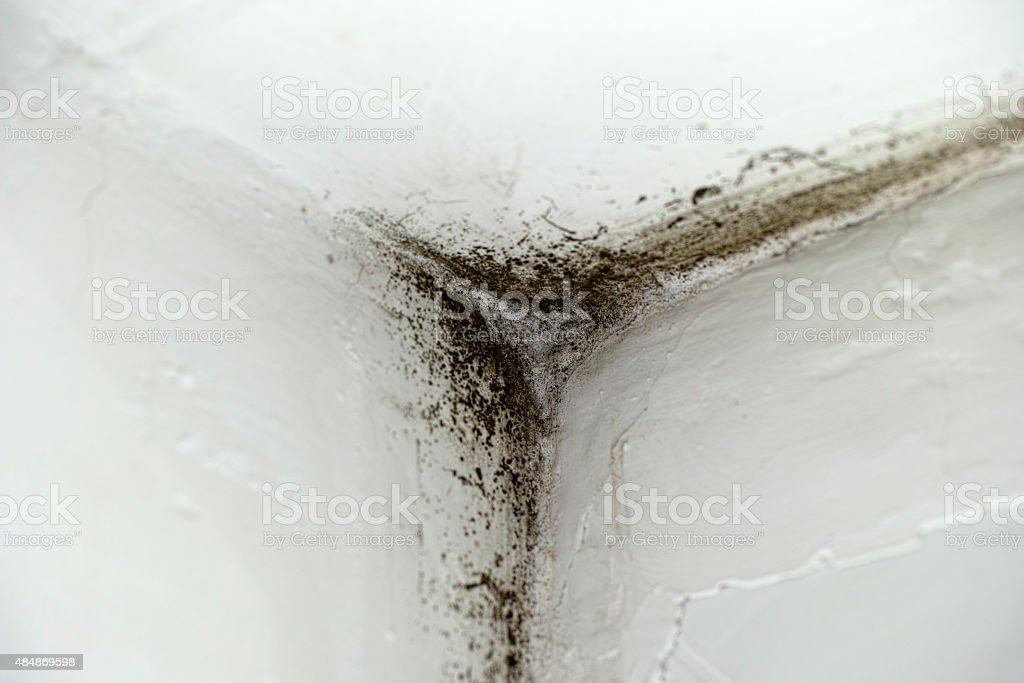 Mold in corner stock photo