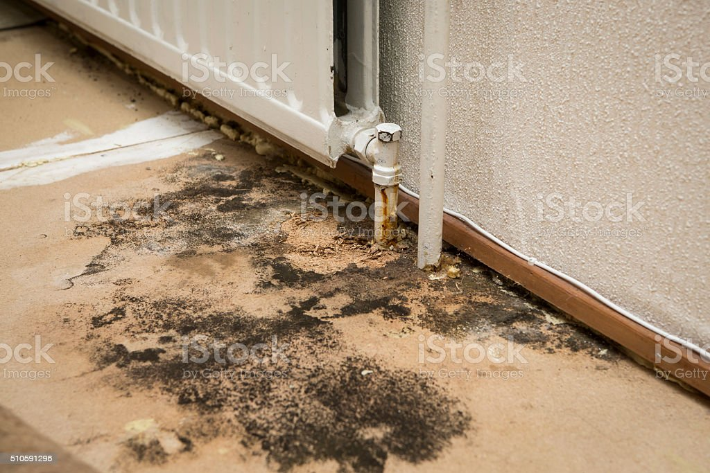mold investigation stock photo